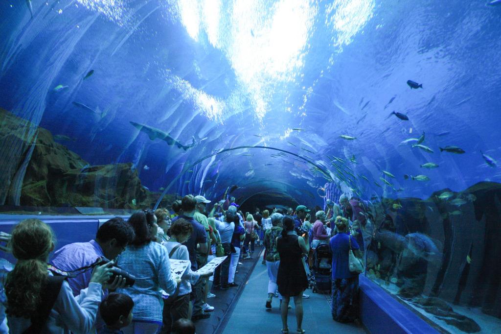 Georgia Aquarium In Atlanta Breathe With Us