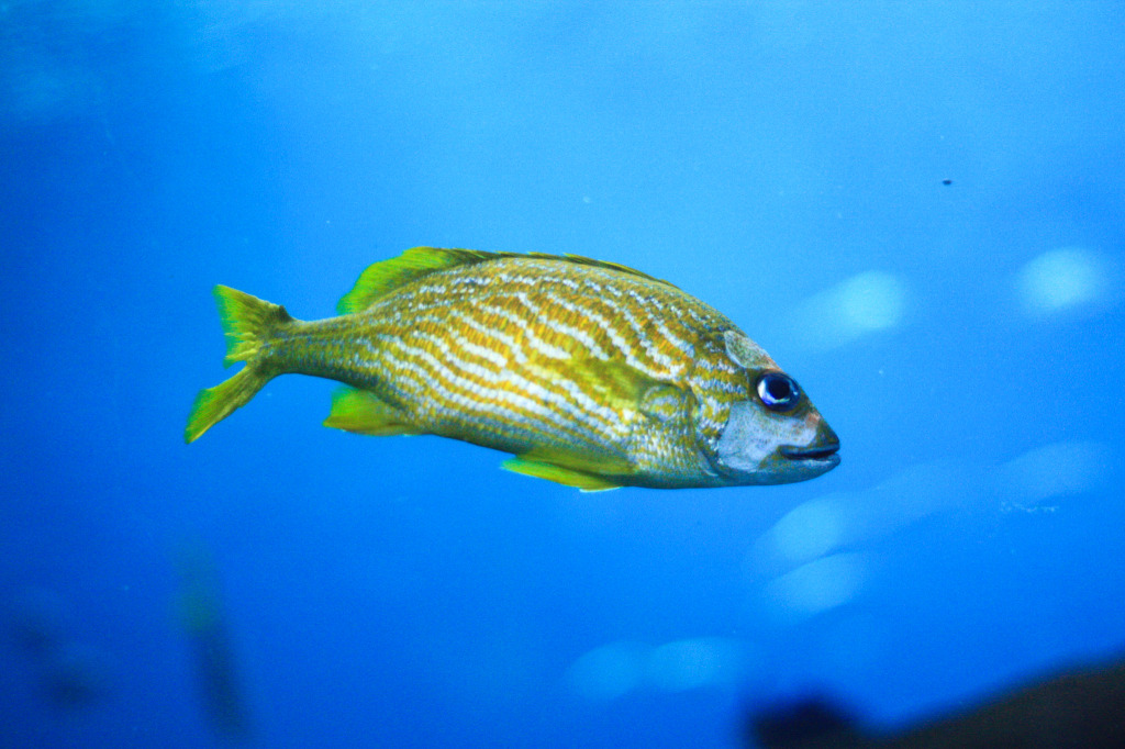 Georgia aquarium in atlanta breathe with us for Georgia freshwater fish
