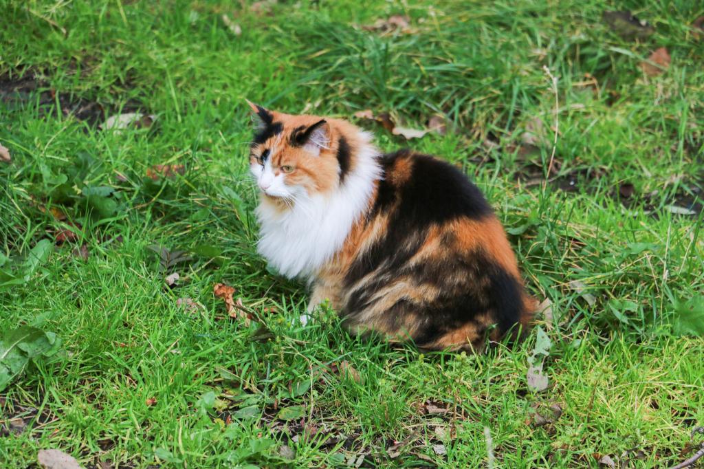 Reykjavik cat #3