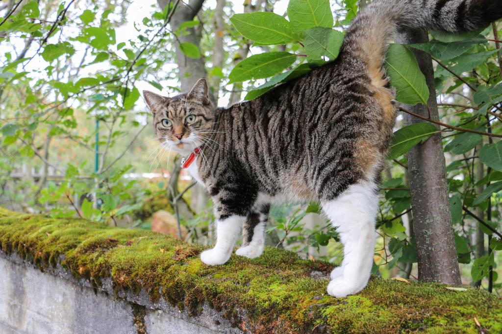 Reykjavik cat #2