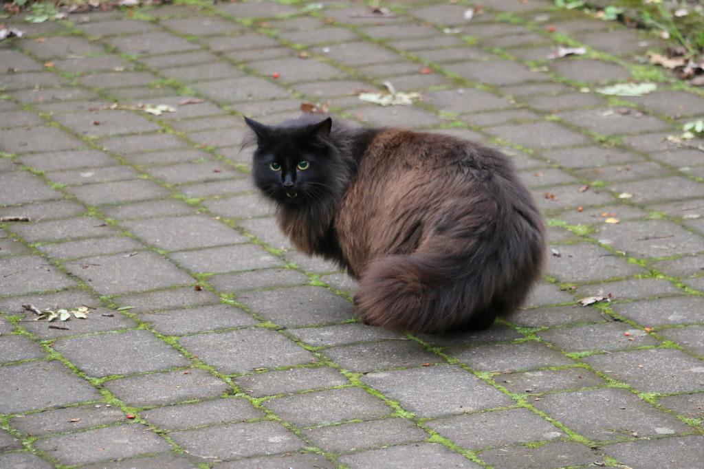 Reykjavik cat #1