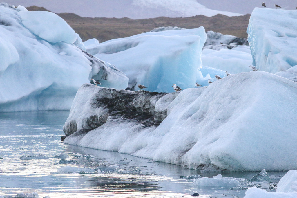 Birds enjoying the icebergs in Jökulsárlón
