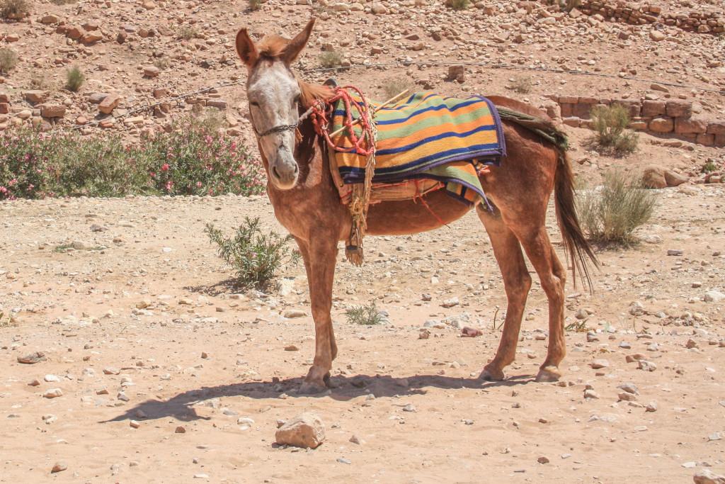 Donkey ride?