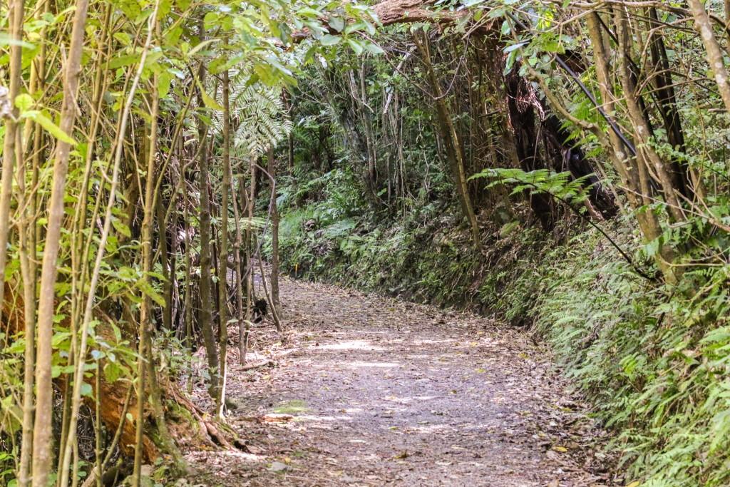 Zealandia Forest