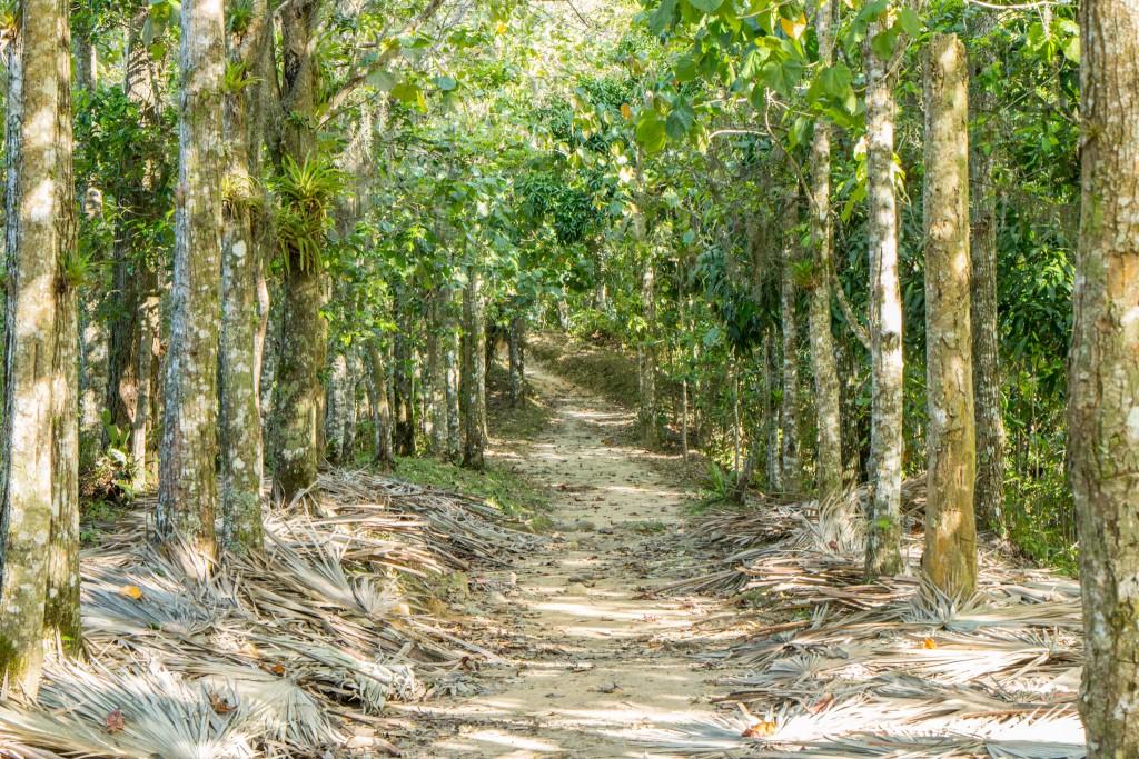 Sierra Maestra forest