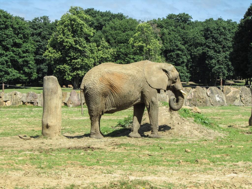 Parc de Thoiry Elephants